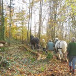 Horse Logging at Hallr Wood